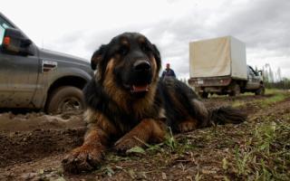 Artisan - crew dog
